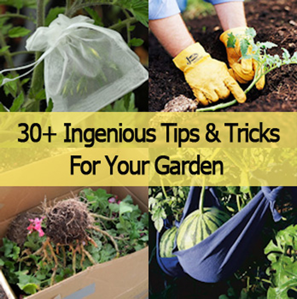 30 ingenious tips and tricks for your garden- DIYscoop.com