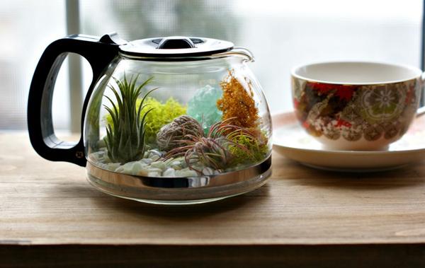 Make a coffeepot terrarium- DIYscoop.com