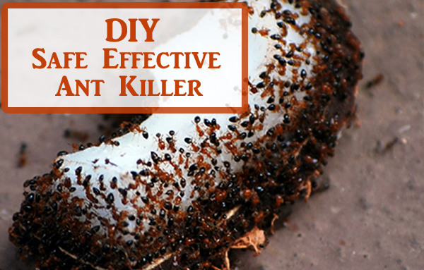 diy safe effective ant killer